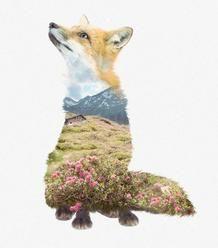 Faunascape - greeting card - Fox