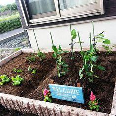 女性で、4LDKのガーデン雑貨/畑/花壇/手作り/家庭菜園/庭…などについてのインテリア実例を紹介。「庭の小さな家庭菜園♡」(この写真は 2014-09-04 22:09:18 に共有されました)