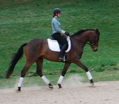 Ardara Sport Horses