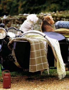 Country outing. English Country Manor, British Country, English Style, English Countryside, Town And Country, Country Life, Country Living, Country Estate, Mans Best Friend