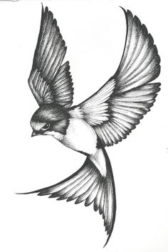 Swallow Tattoo Design by tea-and-booty on DeviantArt Swallow Tattoo Design, Tattoo Design Drawings, Pencil Art Drawings, Bird Drawings, Art Drawings Sketches, Tattoo Sketches, Animal Drawings, Tattoo Designs, Barn Swallow Tattoo