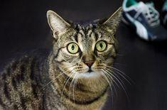 Was tun wenn die Katze Verstopfung hat? Die besten Hausmittel gegen Verstopfung bei Katzen sowie natürliche Abführmittel lösen die Beschwerden!