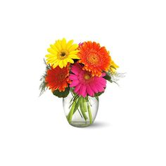 Gerbera Daisies Vase at KCFlorist Flowers Online (285 VEF) ❤ liked on Polyvore featuring home, home decor, flowers, fillers, backgrounds and plants