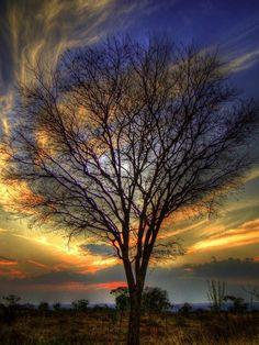 Un árbol, un milagro, una conjunción atmosférica, un festín visual, el hombre testigo y transmisor