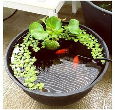 Container Pond, Container Water Gardens, Container Gardening, Small Water Gardens, Garden Water, Garden Pond, Patio Pond, Ponds Backyard, Backyard Ideas