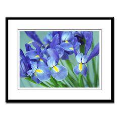 Spring Purple Irises Photo Large Framed Print
