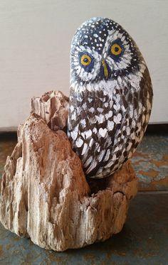 Barn Owl with Driftwood