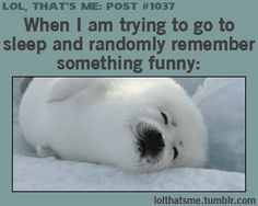 Omergawddddd the Arctic seal is so CUTEEEEE I don't look that cute when I'm sleeping lol. But yea