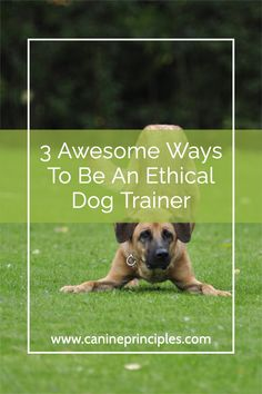No commands, no force or threats, no expectations from confused dogs and we always set them up to succeed and to be the most wonderful individual that they are. Click the pin for your free class from Canine Principles #ethicaldogtraining #caninecoaching #dogtrainingethics Potty Training Tips, Training Your Dog, Train Information, Holistic Care, Puppies Tips, Positive Reinforcement, Dog Behavior, New Puppy, Self Confidence