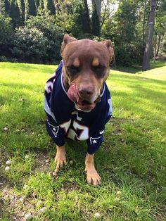 February 20 is National Love Your Pet Day, so we've collected some of our favorite snaps of Patriots players and their four-legged friends. Mans Best Friend, Girls Best Friend, Tom Brady Goat, Patriots Quarterbacks, Love Your Pet Day, Tom Brady And Gisele, Go Pats, Patriots Fans, Boston Sports