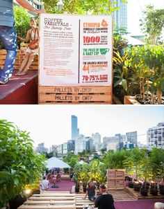 Temporary Urban Coffee Farm Grows