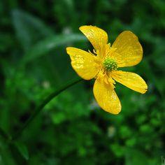 Verde amarelo...