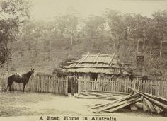 A bush home in Australia in 1895 and explanation of the types of homes such as bark huts and slab huts and wattle and daub homes Australia Day, Victoria Australia, Western Australia, Australian Bush, Australian Homes, Australian Icons, Old Photos, Vintage Photos, Wattle And Daub