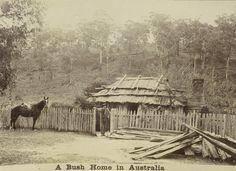 "Album of the Boileau family's voyage from England to Australia in 1894-1895.; Inscription: ""A Bush Home in Australia""- ca. 1895"