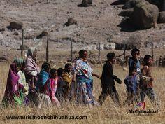 TURISMO EN CHIHUAHUA. En el Municipio de Uruachi y en los poblados de Matachí, Tutuca y Yepachí, en la colindancia con Sonora, se encuentran los Pimas. El resto, más de 50,000 indígenas, son Rarámuris que habitan en casi toda la sierra, pero sobre todo en los Municipios de Becoya, Urique, Guachochi, Batopilas, Carichí, Balleza, Guadalupe y Calvo y Nonoava. En el Municipio deGuadalupe y calvo en los poblados de Boborigame y Nabogame habitan Tepehuanos. www.turismoenchihuahua.com