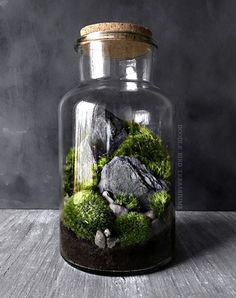 Woodland mousse et fougère Terrarium en grand bocal de verre
