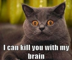 I can kill you - Funny Cat Pics : Some Funny Cat Memes - Cat Quotes - Funny Cat Quotes Animal Captions, Funny Animal Photos, Funny Animal Pictures, Animals Photos, Funny Captions, Funny Animal Memes, Funny Dogs, Funny Animals, Cute Animals