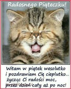 Good Night, Good Morning, Motto, Funny Quotes, Jokes, Cat Lovers, Humor, Thankful, Pictures