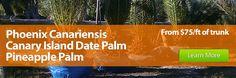 Wholesale Palm Trees Florida, Palm Nursery, Tree Farm & Landscaper.