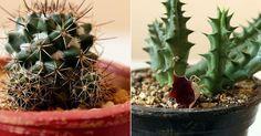 NATURALEZA TROPICAL nos muestra cómo reproduce plantas crasas para acertar siempre. ¿Sabías que cuentas con 3 métodos?