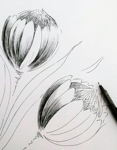 A drawing study of 2 Proteas - Modern Africa Painting, Protea Flower, Drawing Studies, Vector Flowers, White Art, Public Art, Art Techniques, Art Inspo, Art Sketches