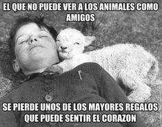 Los animales son nuestros amigos, no nuestro alimento