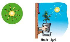 Guía de Cultivo de Marihuana
