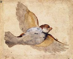 Study of a Flying Sparrow ( between 1515 and 1520). Giovanni da Udine (1487–1564).