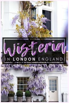 Here's your guide to finding the best wisteria in London. Thinking of visiting the UK capital of London in the spring? Here's where to enjoy and see wisteria flowers, vines, and blooms in England Europe Travel Guide, Europe Destinations, Travel Guides, Photography Guide, London Photography, Uk Capital, Purple Wisteria, London Free, London Summer