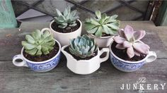 Sweet Succulents in Ironstone - The Junkery