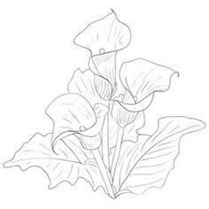 Calla Lilies Drawing Beautiful <b>flowers calla lilies</b> on a white background <b>drawn</b> by <b></b>