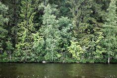 https://flic.kr/p/vYTkoQ | Untitled | Lake Lappajärvi (Lappajärvi, Finland). Set:  Nature - Forests