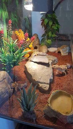 Leopard Gecko Setup, Leopard Gecko Cage, Leopard Gecko Terrarium, Lepord Gecko, Leopard Gecko Habitat, Reptile Decor, Reptile Room, Cute Lizard, Cute Gecko