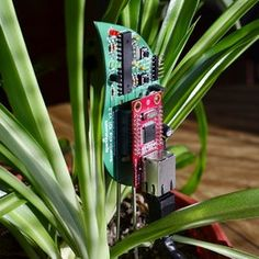 Stop murdering plants and start murdering plant-watering with this super-cool gi...
