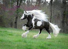 Estes Cavalos Têm as Crinas Mais Belas Que Eu Já Vi!                                                                                                                                                                                 Mais
