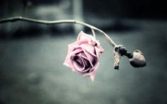 flower images for backgrounds desktop free, 1920x1200 (216 kB)