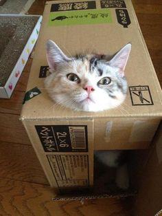 cat-pic:  この顔がいいです。持ち手の穴に頭がはまりました