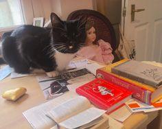 a little blog post:) http://alicewonderland2.blogspot.co.uk/2016/04/a-creative-magic-cat-life0.html #cat #office