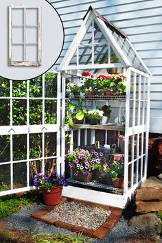 a flower filled greenhouse made of old windows with a peaked roof and the front door swung wide open against a green bush, it's back against the pale blue siding of a house