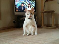 Twitter / chomo_bank: うちの猫の座り方どうにかしてくれねえかな。 http://t ...