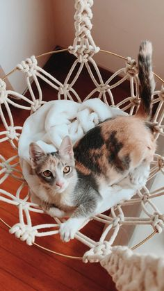 Macrame Chairs, Weekend Crafts, Cat Hammock, Fancy Cats, Cat Room, Cat Decor, Macrame Design, Pet Furniture, Macrame Projects