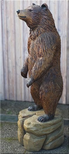 bear grizzly bär