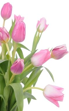 Pink Tulips for Breast Cancer from ACS