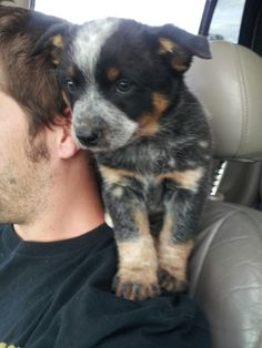 This is exactly how Ellie would ride with me when she was itty bitty