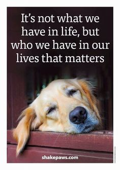 It's not what we have in life, but who we have in our lives that matters. #doglove