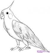 Sketches of birds, drawing birds easy, realistic drawings of animals, drawi Realistic Animal Drawings, Bird Drawings, Art Drawings Sketches, Easy Drawings, Pencil Drawings, Drawing Animals, Drawing Birds Easy, Parrot Drawing, Bird Sketch
