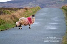 Beautiful images from around Inishowen and surrounding areas :)