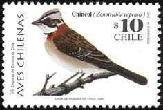 Rufous-collared Sparrow stamps - mainly images - gallery format
