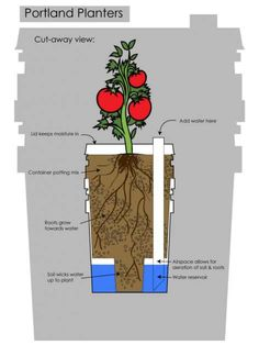 self watering or sub-irrigated planters Bucket Gardening, Hydroponic Gardening, Container Gardening, Aquaponics Greenhouse, Vegetable Gardening, Diy Self Watering Planter, Self Watering Containers, Wicking Beds, Aquaponics System