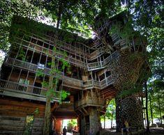 Casa en el árbol más grande del mundo. La Casa del árbol del Ministro - Noticias de Arquitectura - Buscador de Arquitectura